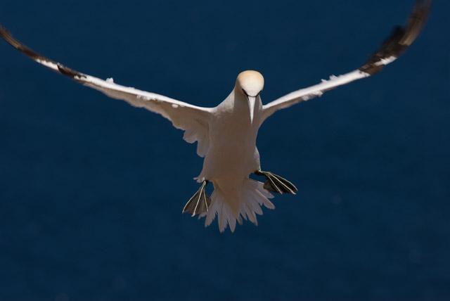oiseau-en-vol